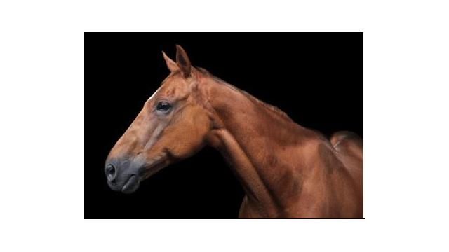Horse 40 x 60