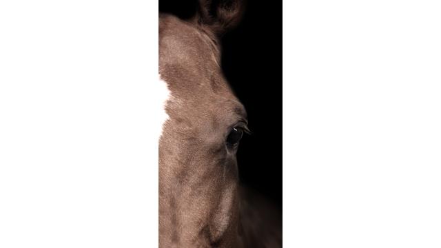 Horse Eye Right Print