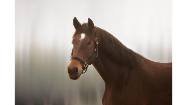 Horse Panoramic